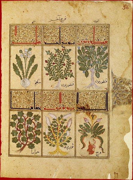 Manuscrits_botanique